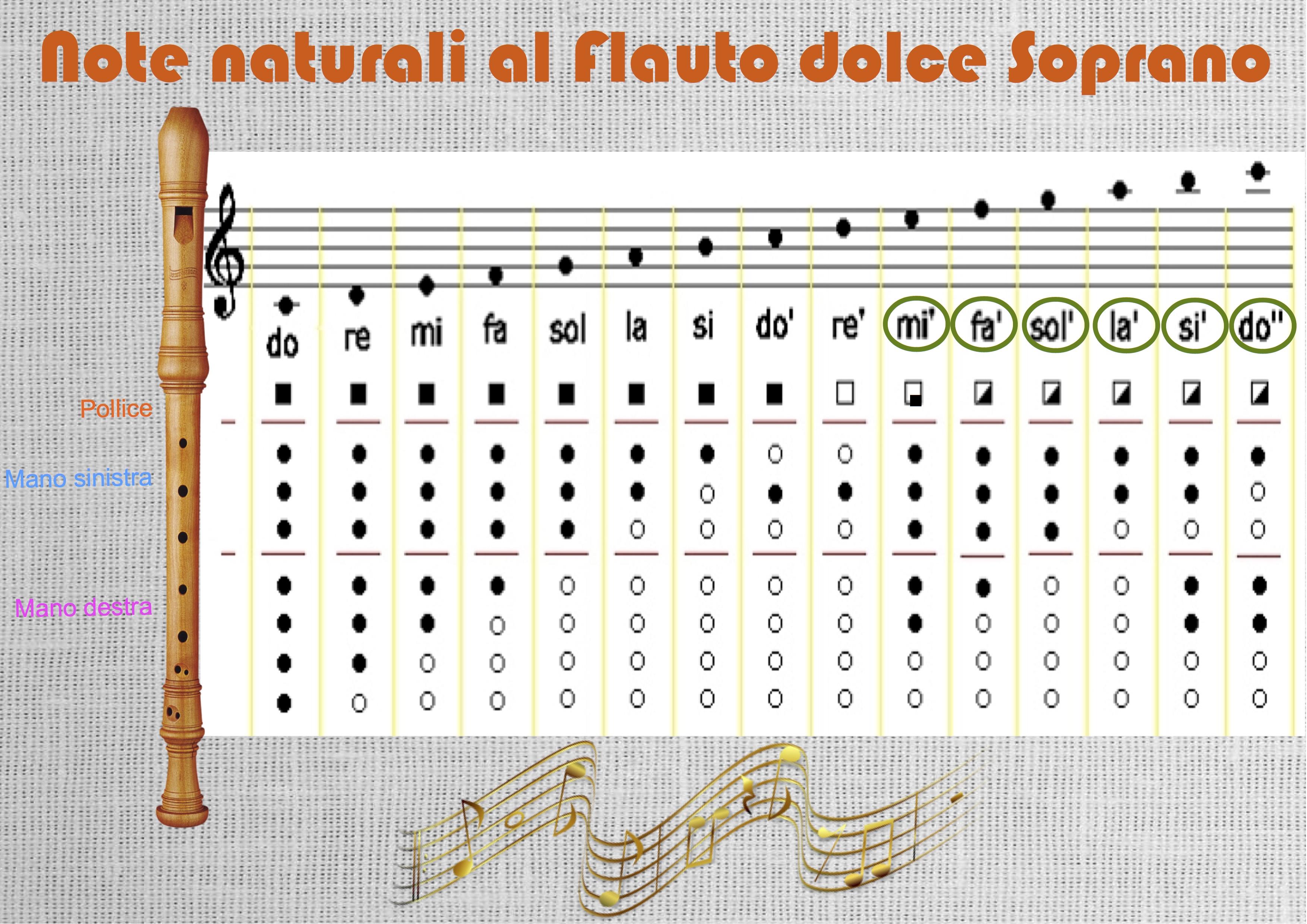 Tavola della diteggiatura note naturali al flauto dolce - Tavola posizioni flauto traverso ...